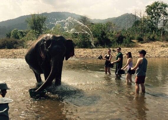 Unglaubliche Bilder - Doppelter Elefant im Wasser